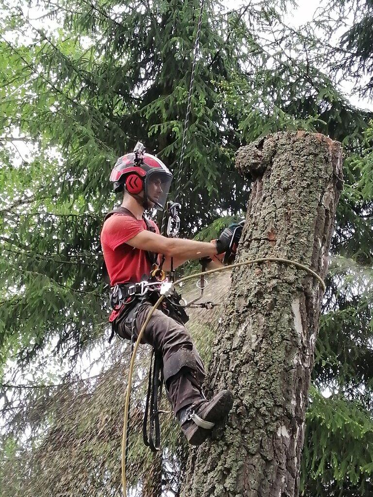 городское благоустройство — Спил деревьев Альпэксперт — Алексин, фото №1
