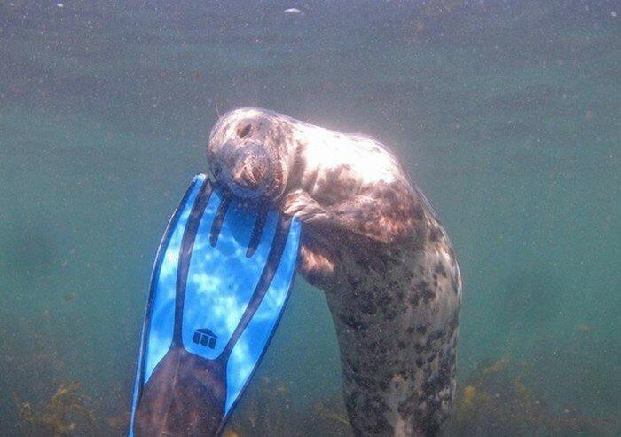 Картинки приколы подводная охота, открытку день