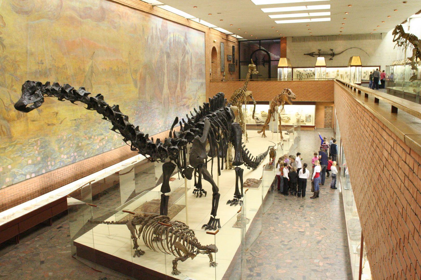«Палеонтологический музей им. Ю.А. Орлова» фото 2