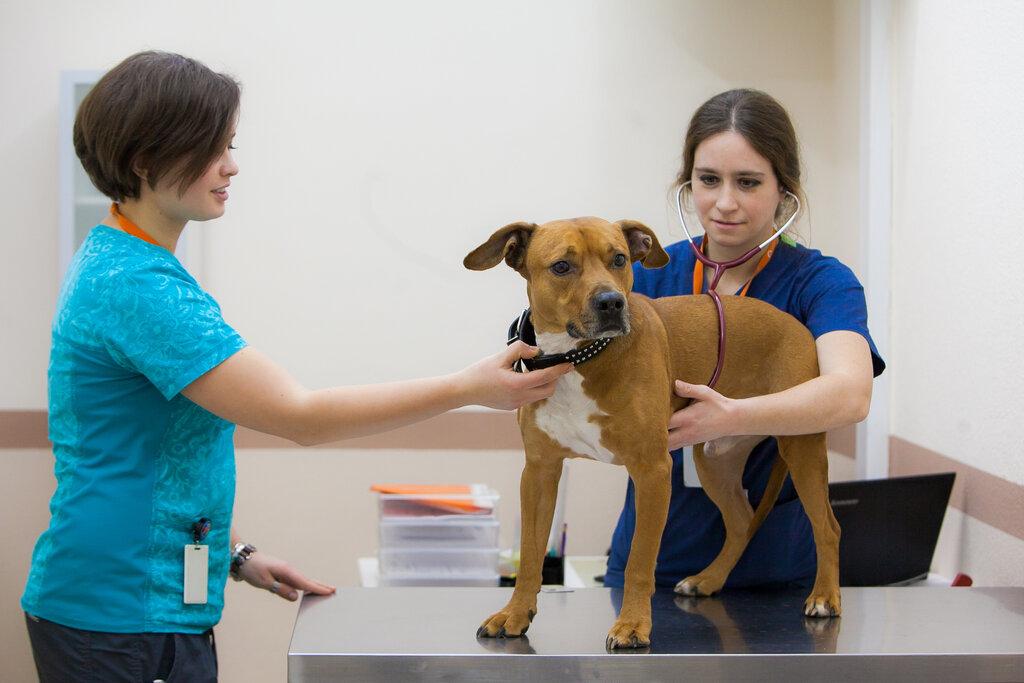 ветеринарная клиника — Биоконтроль — Москва, фото №6