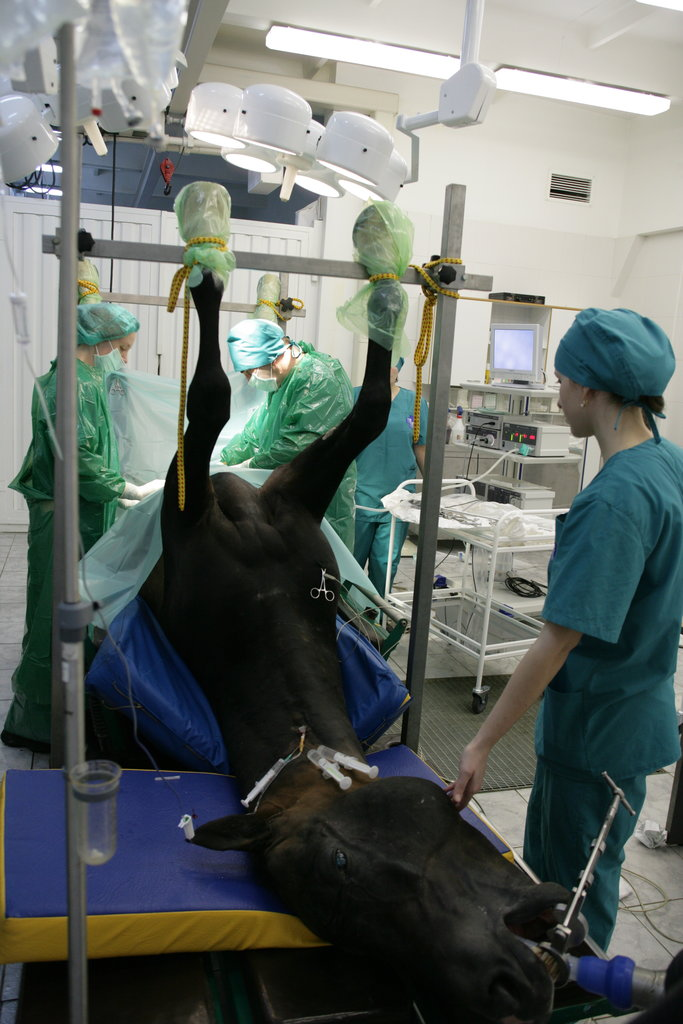 ветеринарная клиника — Новый век — Москва и Московская область, фото №2
