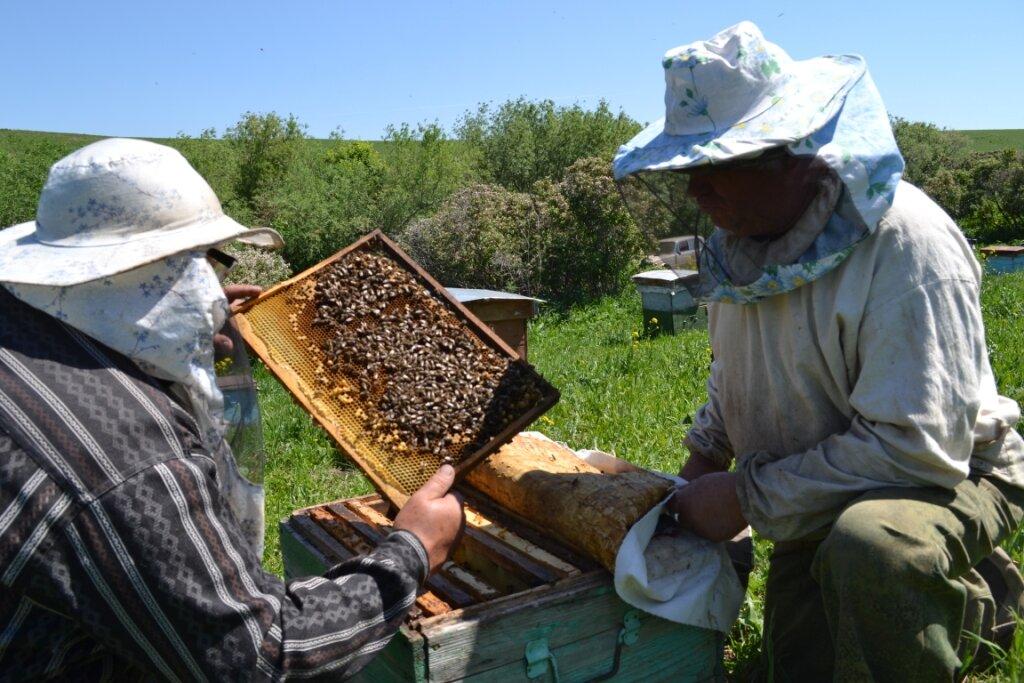 мёд и продукты пчеловодства — Интернет-магазин Мёд предгорья Алтая — Барнаул, фото №1