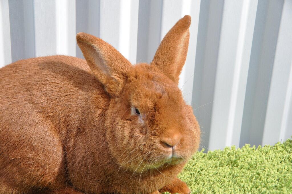 звероферма — Кролики Кролист — Кимовск, фото №6