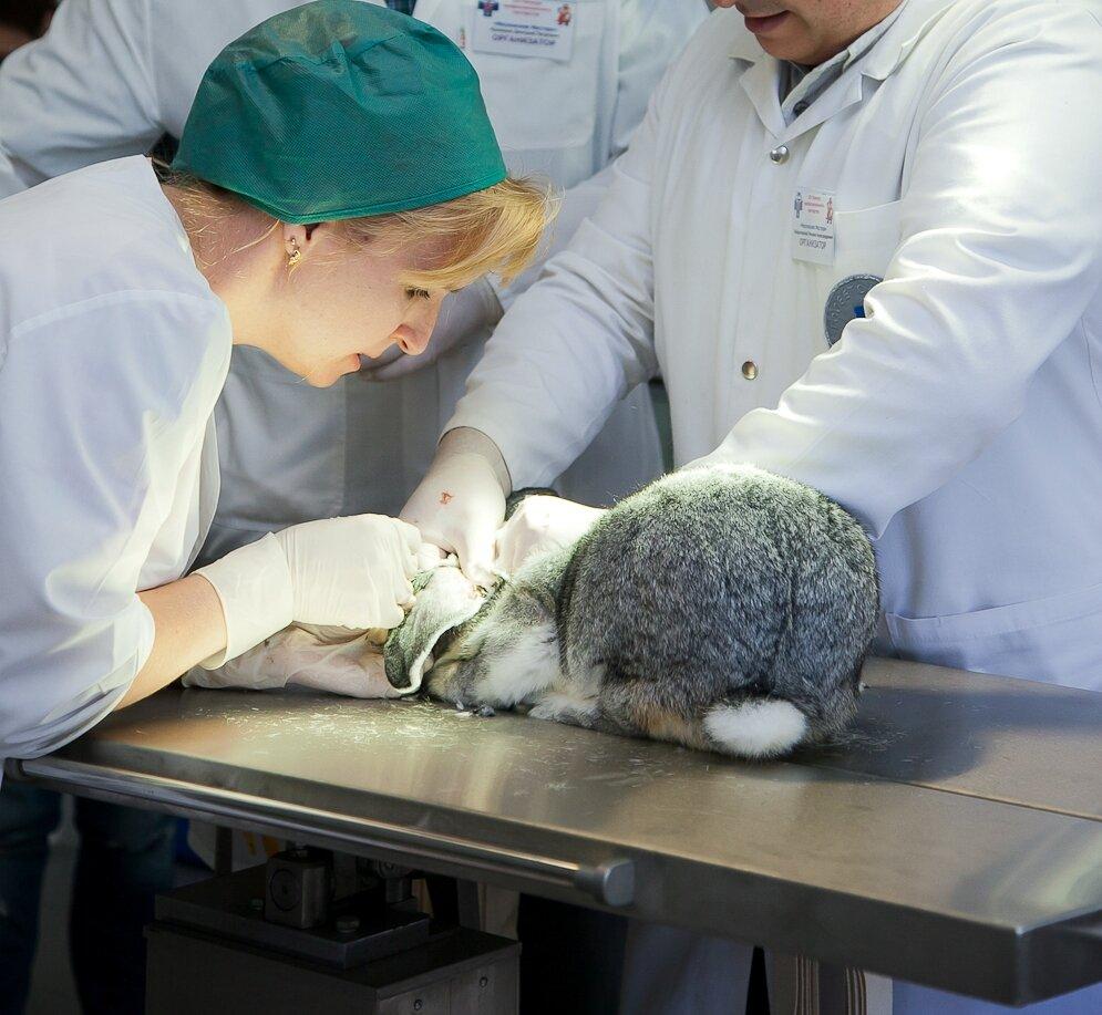 ветеринарная клиника — Станция по борьбе с болезнями животных Юго-Восточного административного округа г. Москвы — Москва, фото №3