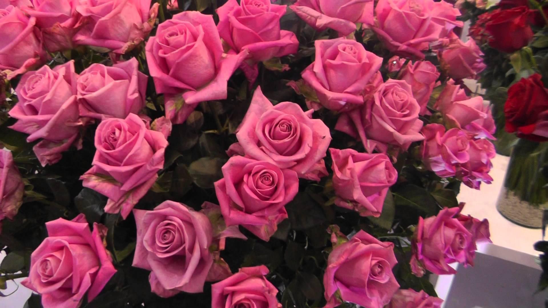 Картинки розы на весь экран