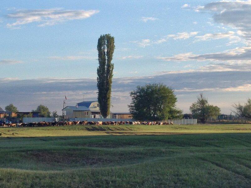 База Партизан на хуторе Громов