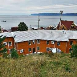 Baikal Cedar