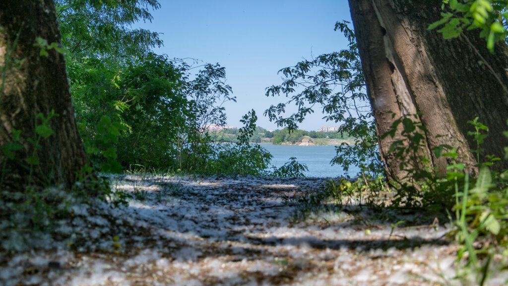 краснодар лесопарк хомуты фото самообороны все