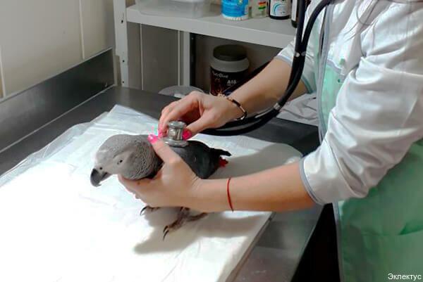 ветеринарная клиника — Эклектус — Москва, фото №1