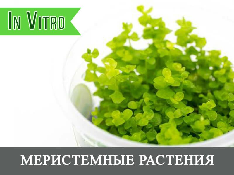 интернет-магазин — Co2 Aqua — Москва, фото №2