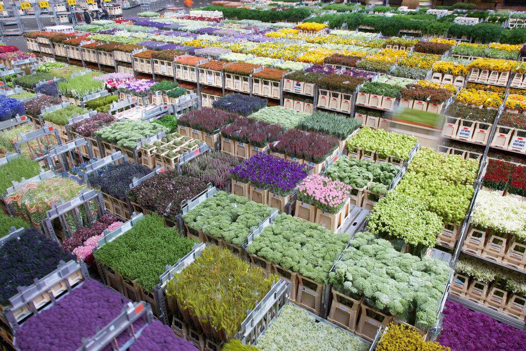 Самая большая оптовая база цветов в москве