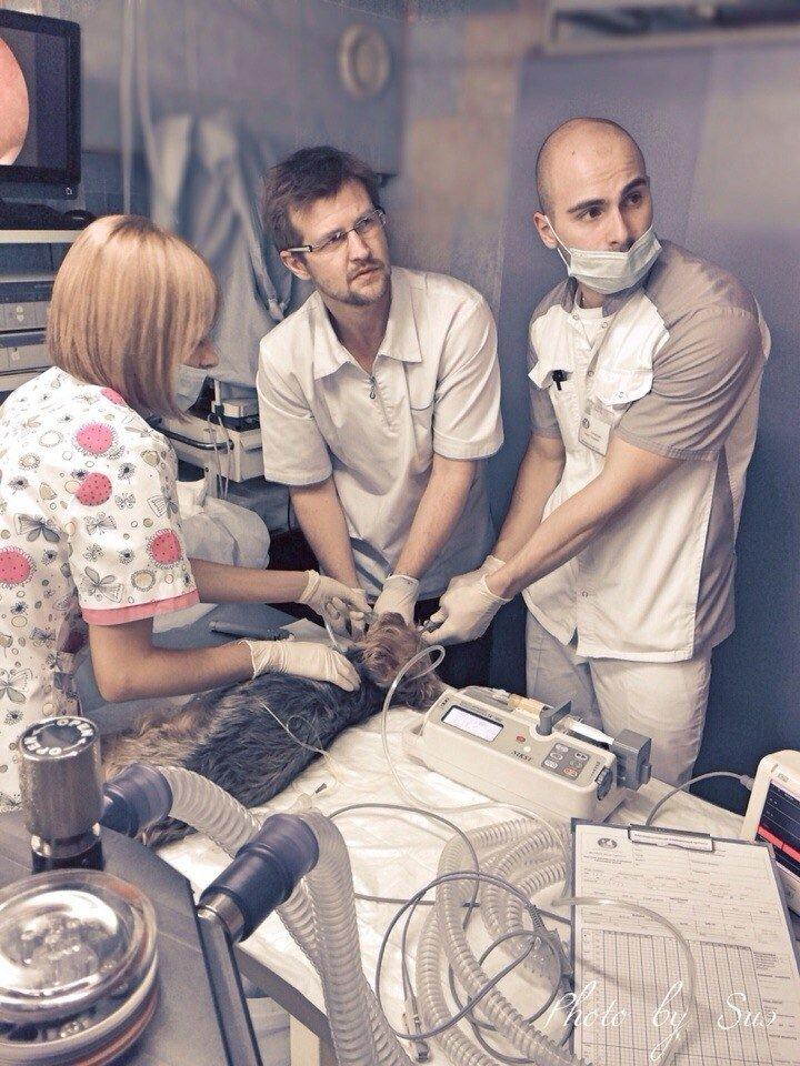 ветеринарная клиника — Ветеринарные центры малотравматичной хирургии и комплексного восстановления Лебеди — Москва, фото №6