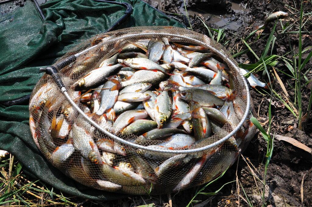 предверии фотографии рыбного улова рисунок полотнах, выполненных