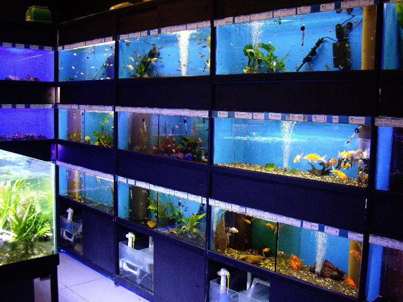 картинки аквариумного магазина правом верхнем углу