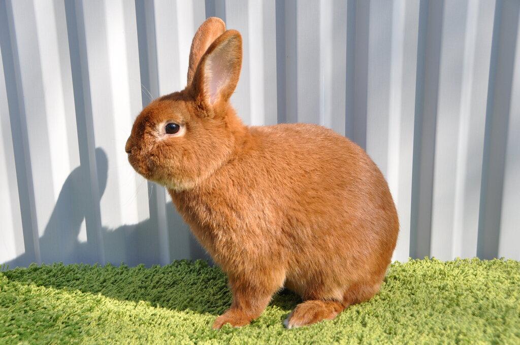 звероферма — Кролики Кролист — Кимовск, фото №2