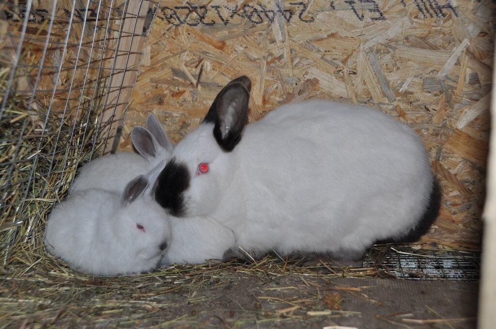 звероферма — Кролики Кролист — Кимовск, фото №10