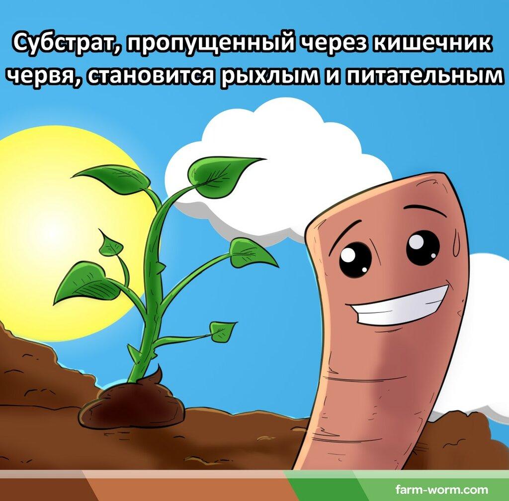 животноводческое хозяйство — Ворми Ферма — Красноярский край, фото №2