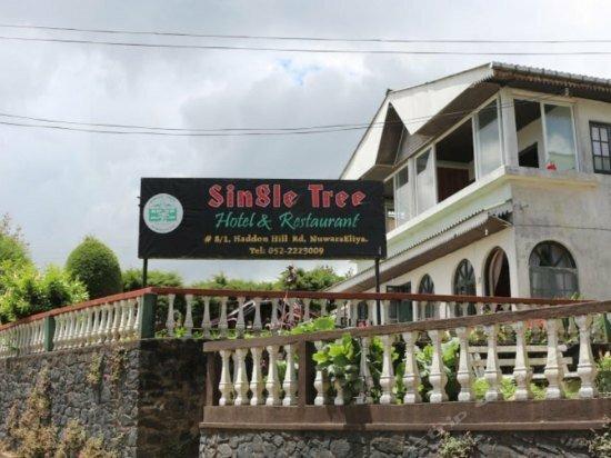 Single Tree Hotel