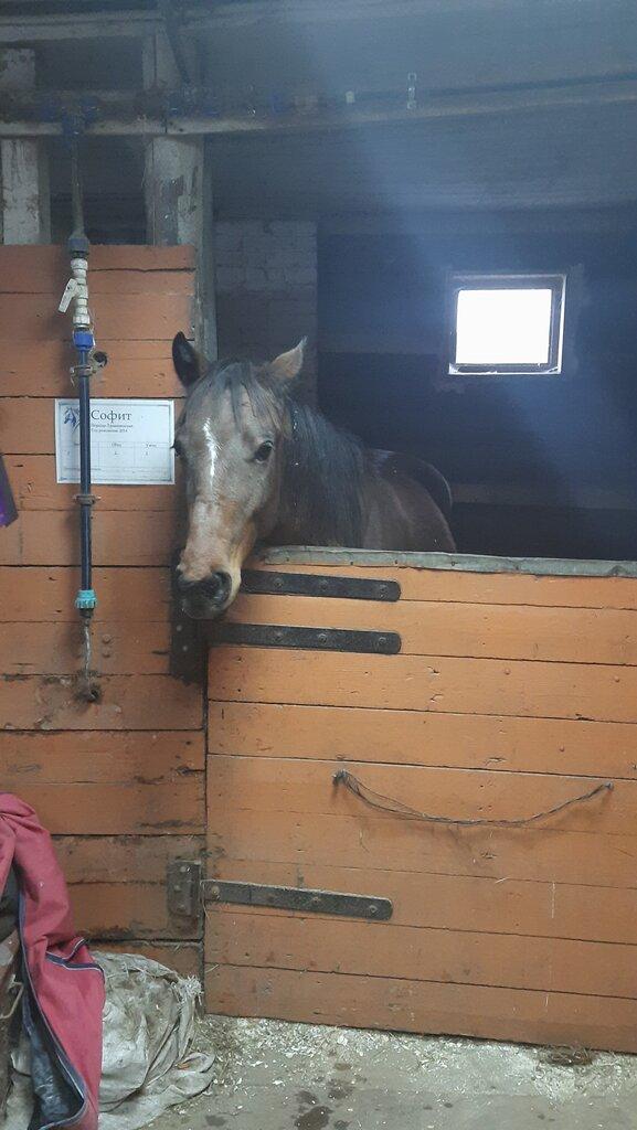 конный клуб — Орловское — Москва и Московская область, фото №2