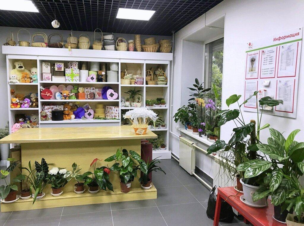 Цветочка магазин цветов москва кутузовский проспект, ранункулюсами тюльпанами