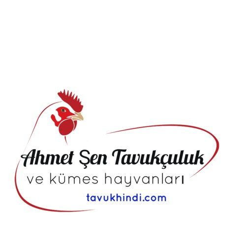 kanatlı hayvan ürünleri ve yumurta — Ahmet Şen Tavukçuluk ve Kümes Hayvanları — Edirne, foto №%ccount%