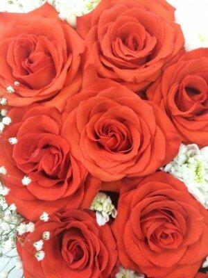 Доставка цветов в белогорске, красивые