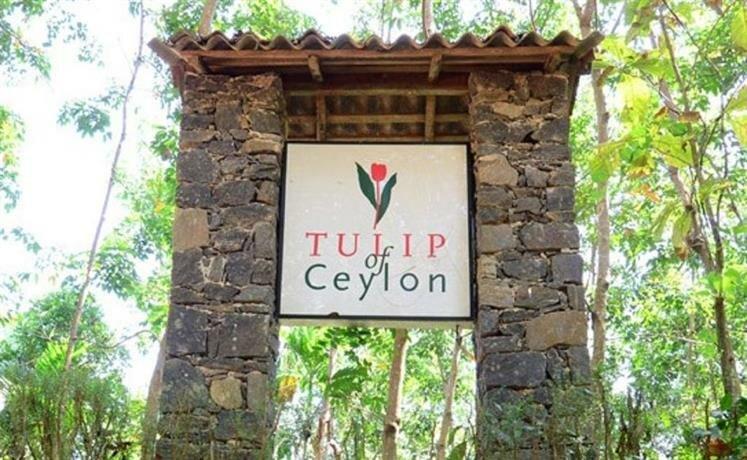 Tulip of Ceylon Nature Resort