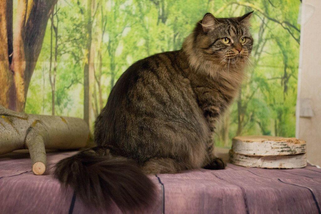 Клубы сибирских кошек москва стрип клуб эгоистка в москве