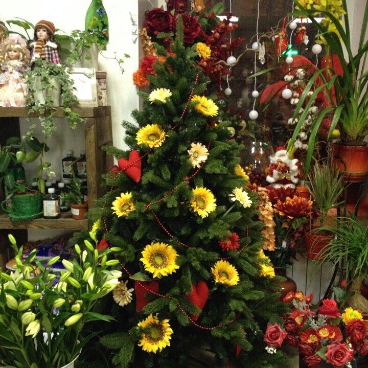 Заказать цветы в мурманске с доставкой круглосуточно в апатиты