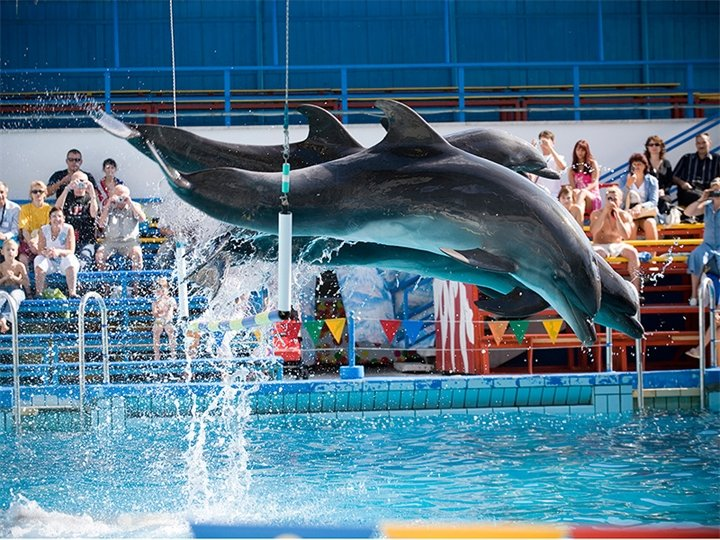 Картинки по запросу ростов на дону Ростовский дельфинарий