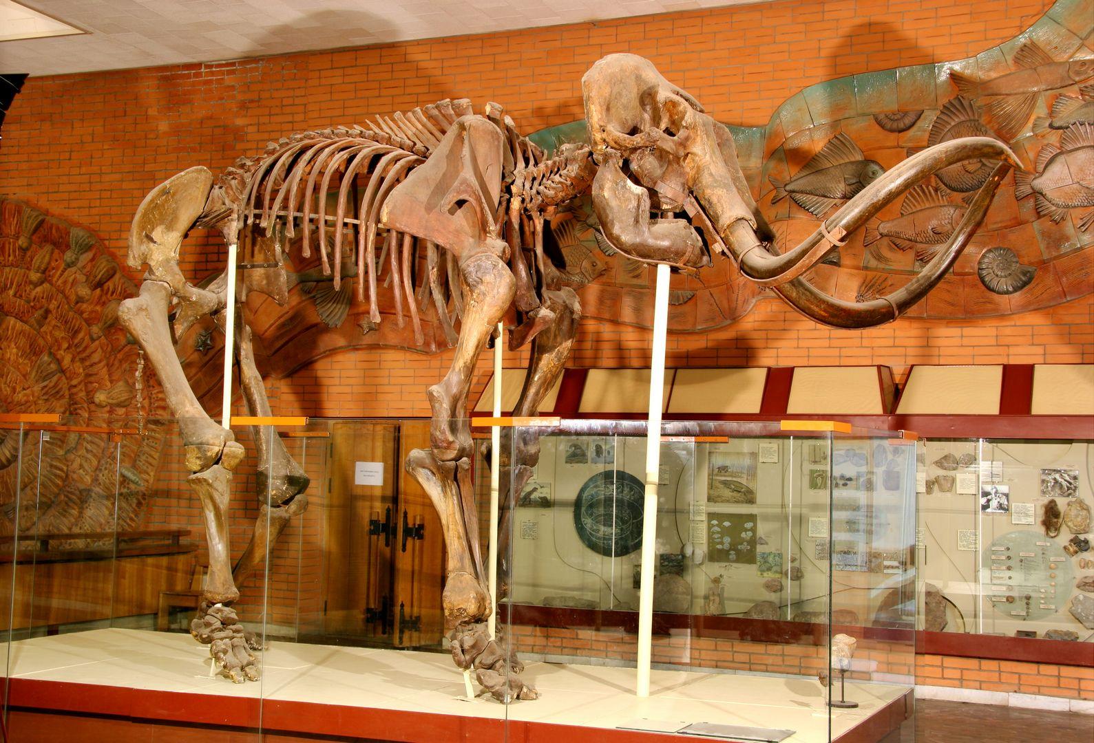«Палеонтологический музей им. Ю.А. Орлова» фото 1