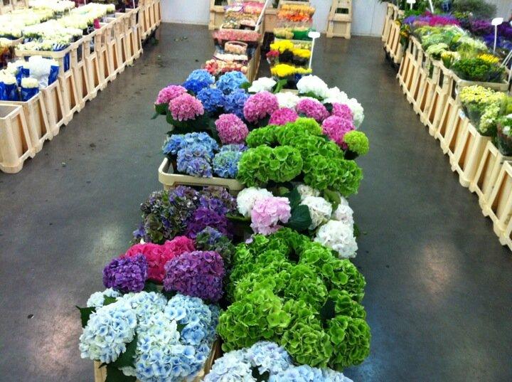 Цветы оптовые цены санкт-петербург, мускари купить