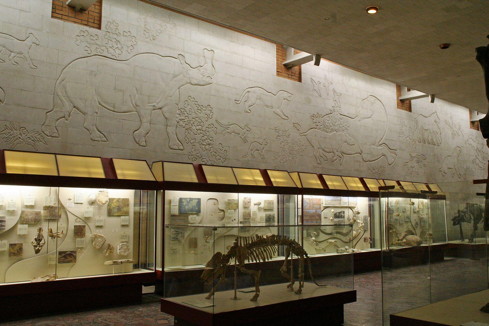 «Палеонтологический музей им. Ю.А. Орлова» фото 5