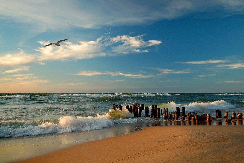алекперов отрицает калининград фото моря стоило