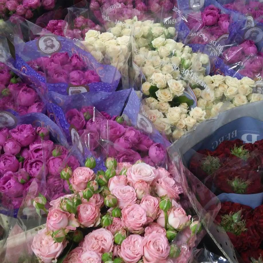 Цветов казахстан, азалия магазин цветов оптом киев