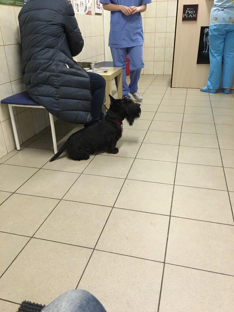 ветеринарная клиника — Перспектива-вет — Санкт-Петербург, фото №8
