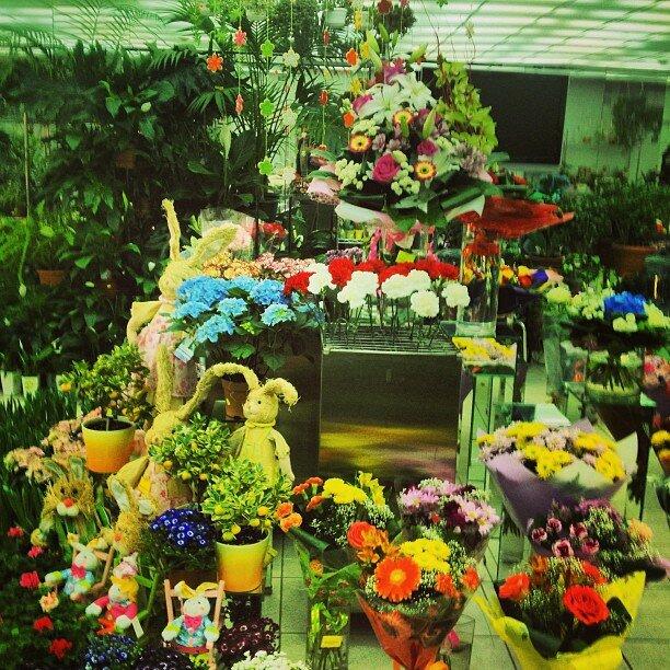 Цветов, доставка цветов и выборгского