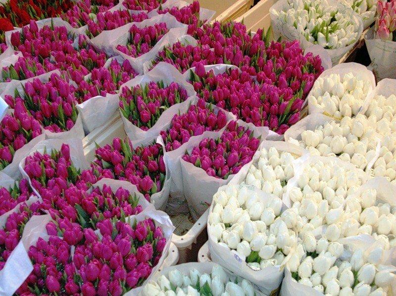 Оптовая покупка цветов по низким ценам с доставкой, невесты дешево заказать