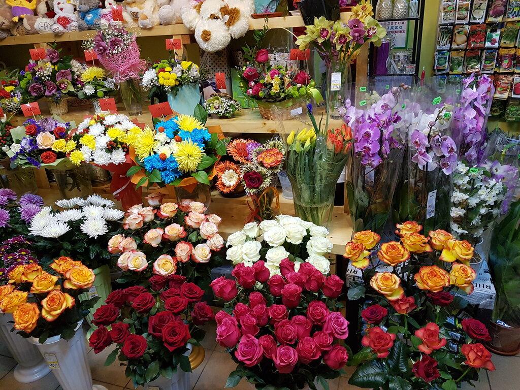 Харьковского плиточного, оптовая база цветов донецк