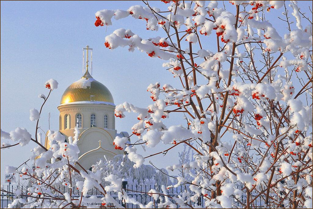 Православные фото открытки, поросятами