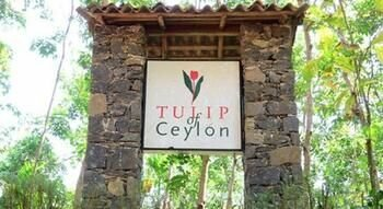 Tulip Of Ceylon
