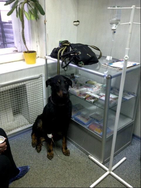 ветеринарная лаборатория — Шанс Био — Москва, фото №7