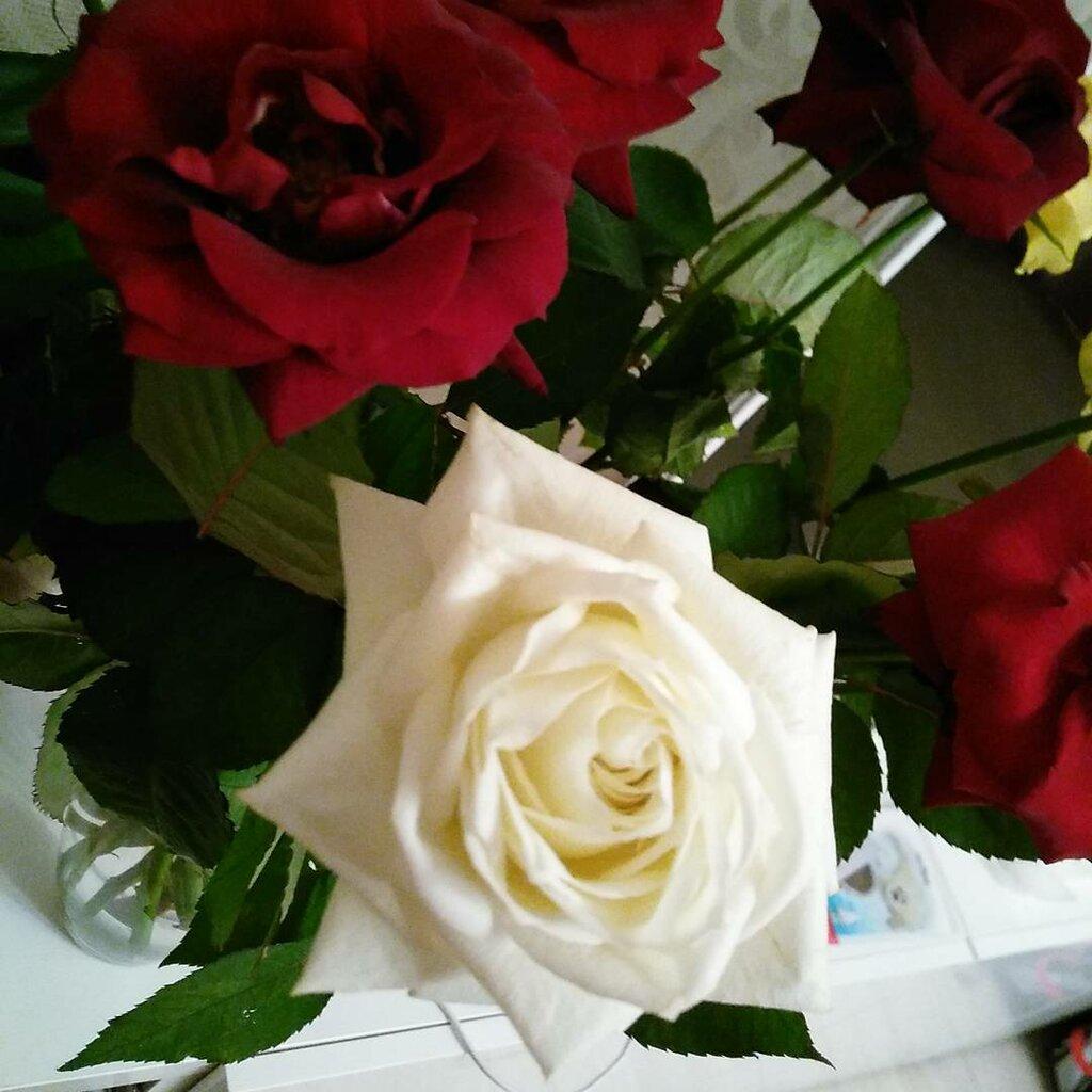 магазин цветов — Красрозы — Красноярск, фото №8