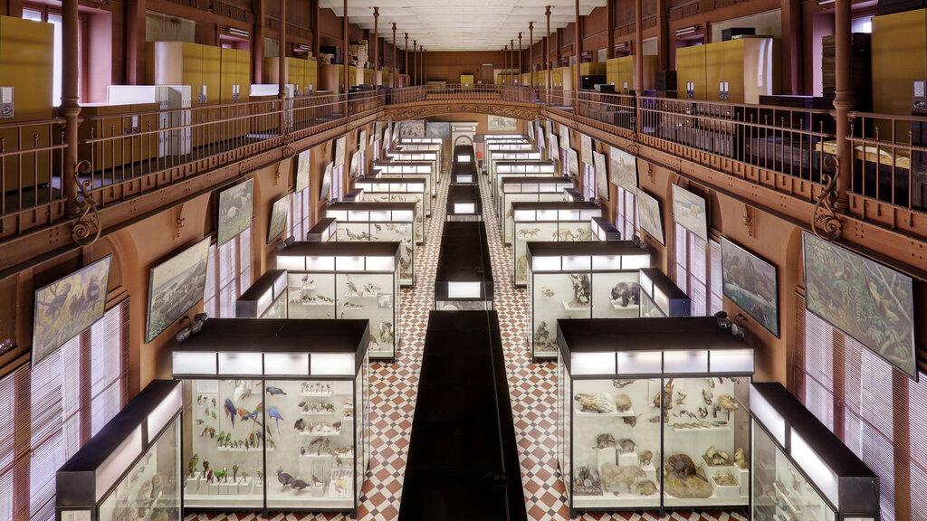 музей — Научно-исследовательский Зоологический музей МГУ имени М. В. Ломоносова — Москва, фото №5