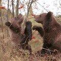 Национальный парк Марий Чодра, Разное в Городском поселении Красногорском