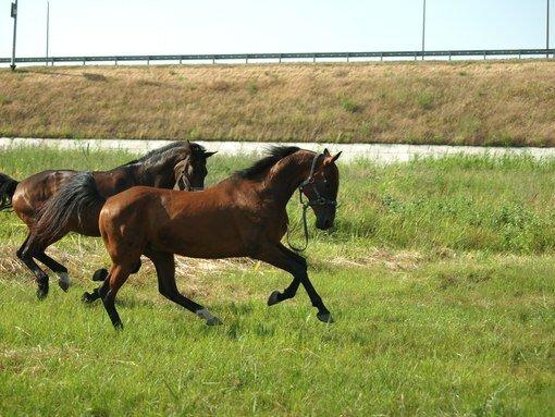 конный клуб — КСК Тандем — садовые участки Луч, фото №2