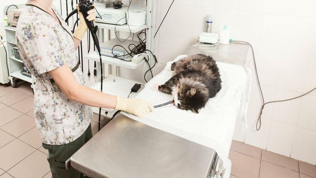 ветеринарная клиника — Лидаветсервис — Лида, фото №1