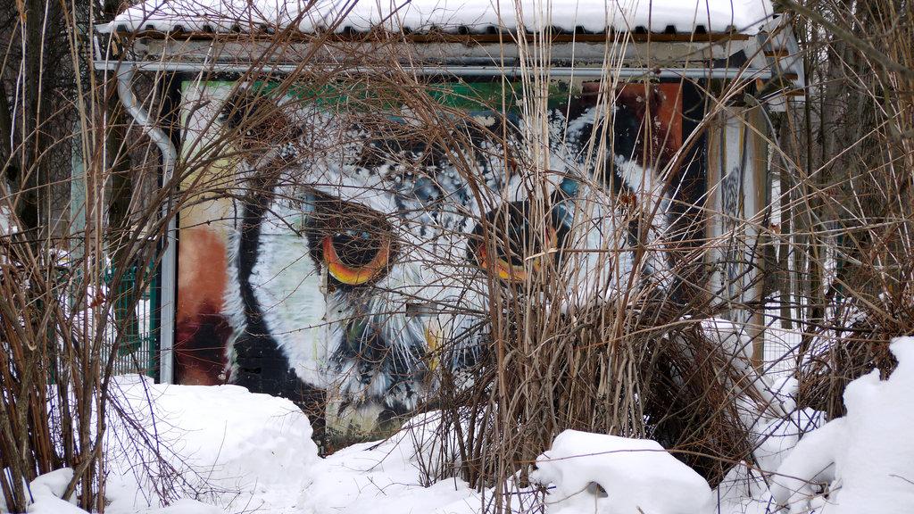 приют для животных — Орнитарий — Москва, фото №9