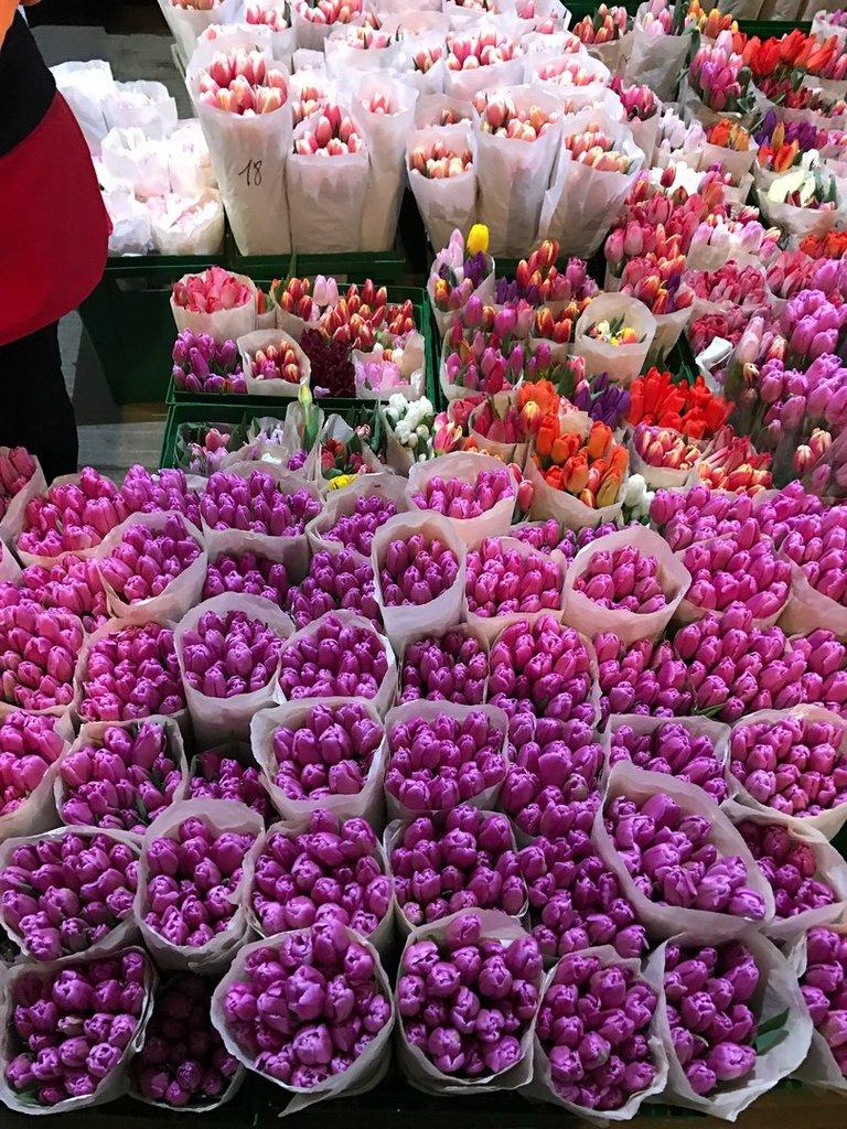 Цветы тюльпаны днепропетровск оптом астана, живые цветы горшках