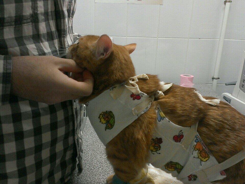 ветеринарная клиника — Ветус — Санкт-Петербург, фото №8